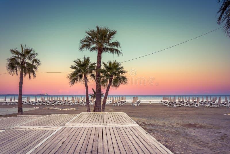 Palmträd och sunbeds på den sandiga stranden av Larnaca, Cypern royaltyfri bild