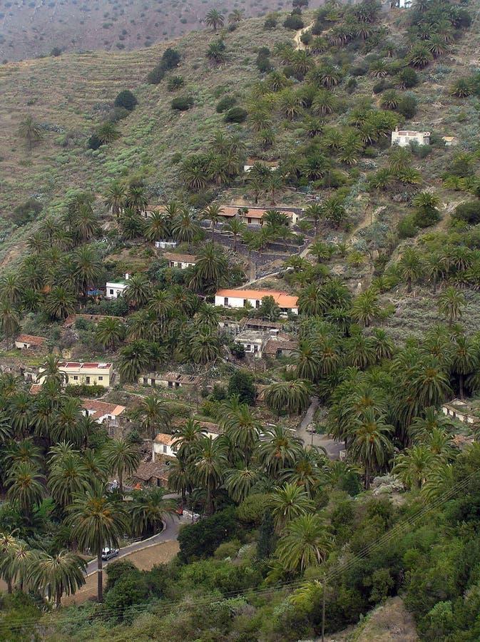 Palmträd på ön av La Gomera royaltyfria bilder