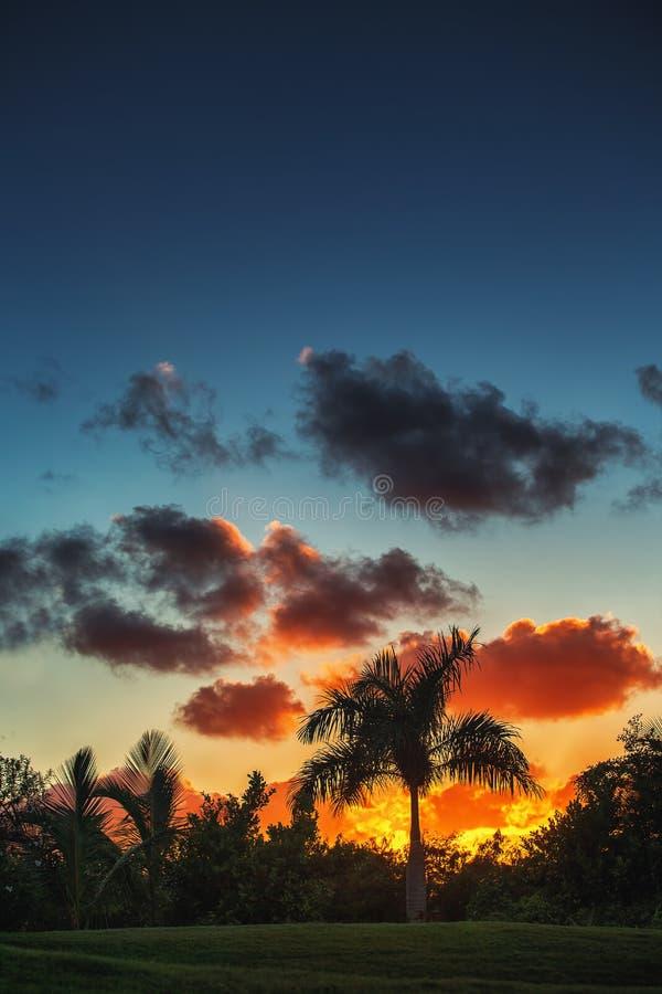 Palmträd på bakgrunden av en härlig solnedgång arkivfoto