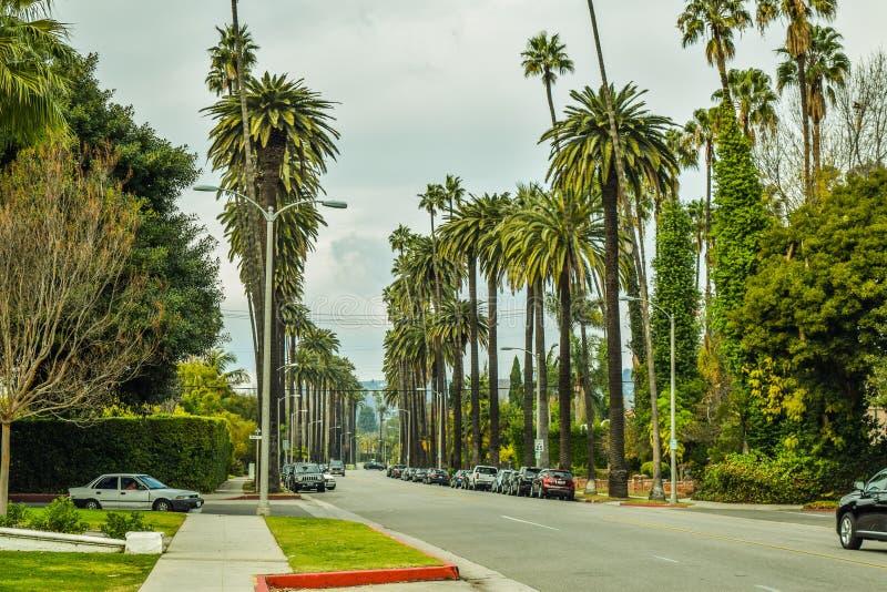 Palmträd på Beverly Gardens Park royaltyfri fotografi