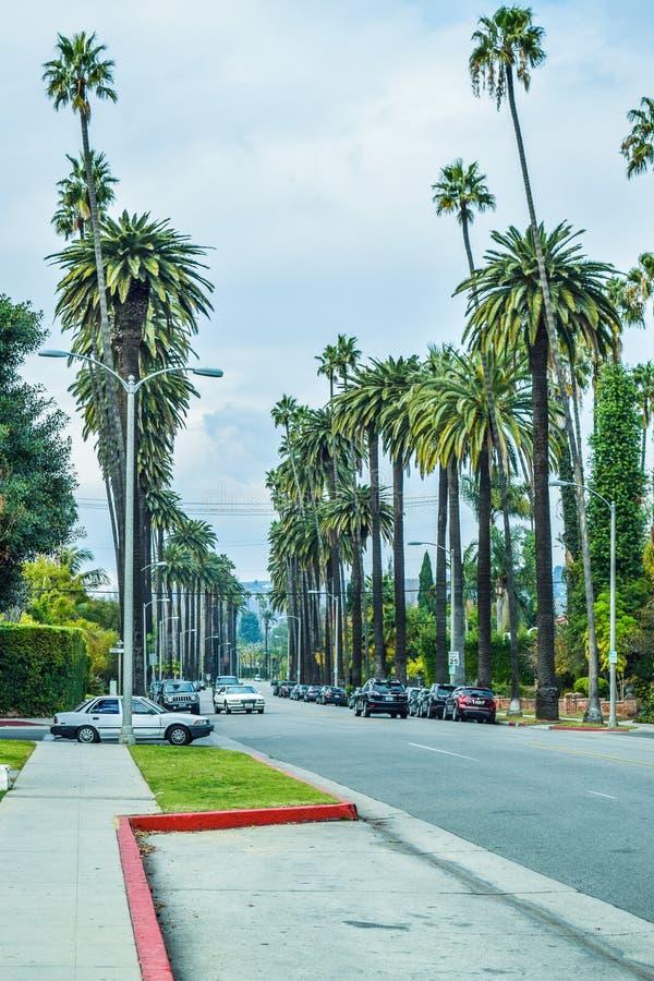 Palmträd på Beverly Gardens Park royaltyfria foton