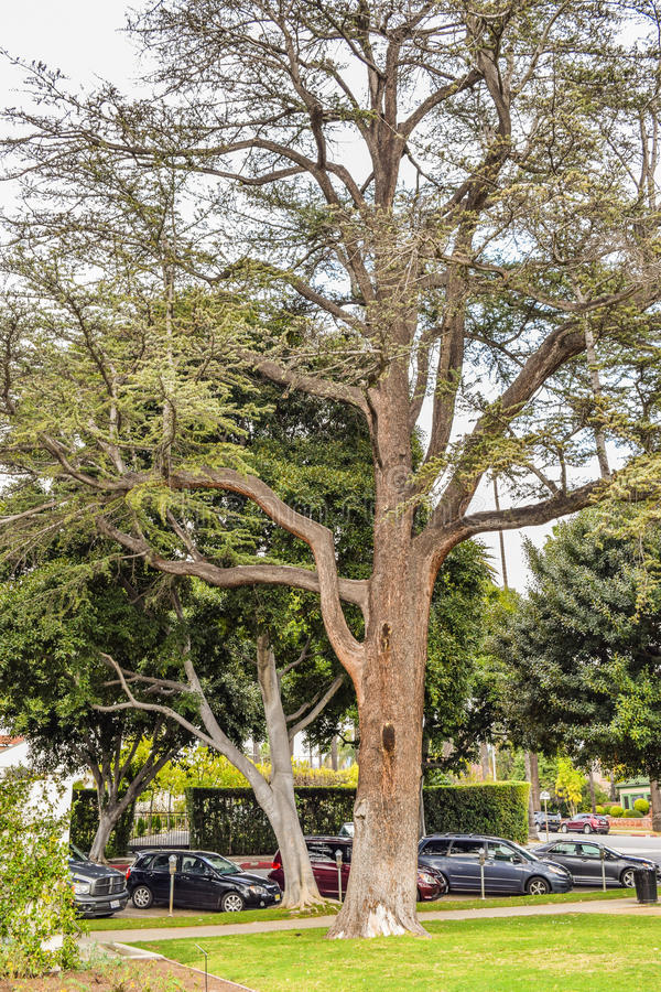 Palmträd på Beverly Gardens Park arkivbild