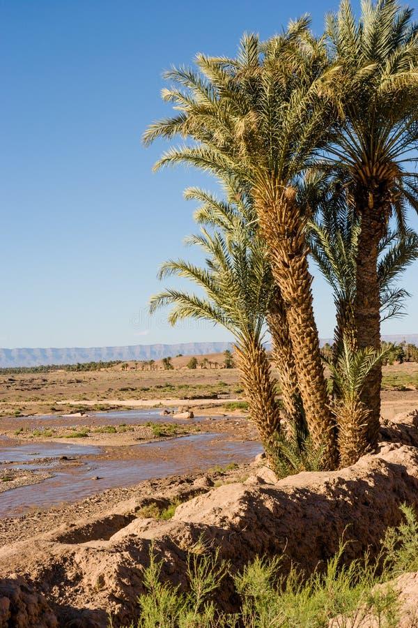 Palmträd på den Draa floden på Zagora i Marocko royaltyfria bilder
