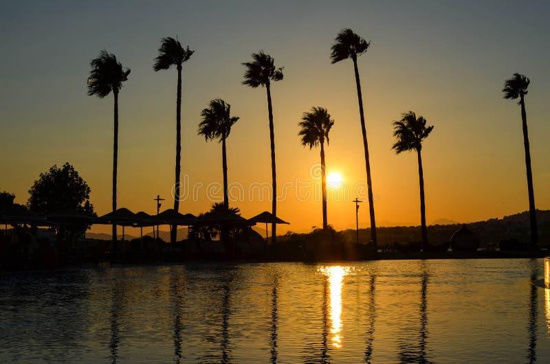 Palmträd på den guld- solnedgången royaltyfri foto