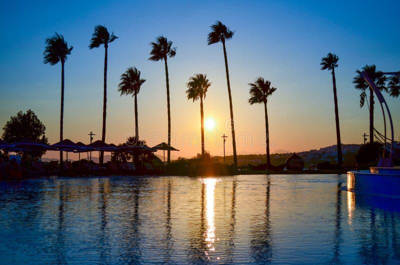 Palmträd på den guld- solnedgången royaltyfria foton