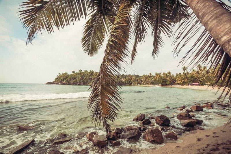 Palmträd på den härliga stranden i tropiskt klimat Hav och trädunge på landskap på soligt väder arkivfoto