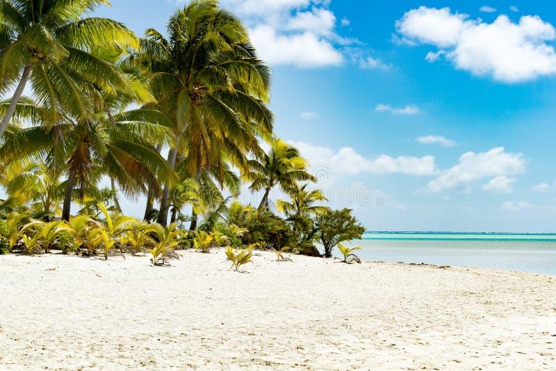 Palmträd på den lilla ön i turkosfrikändvatten, djupblå himmel, vit sand, Stillahavs- ö fotografering för bildbyråer