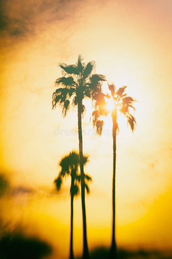 Palmträd på den Santa Monica stranden Bearbetad tappningstolpe Mode loppet, sommar, semestrar det tropiska strandbegreppet arkivfoton