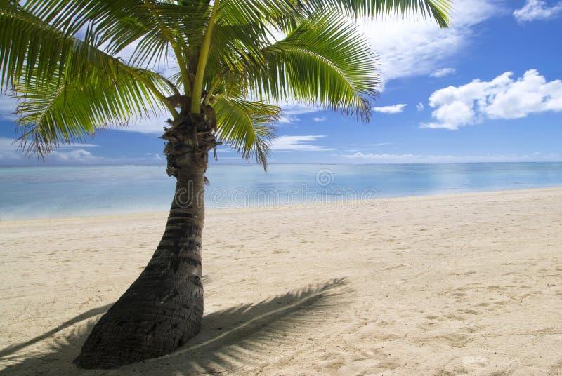 Palmträd på den tropiska sandiga stranden. Aitutaki royaltyfria bilder