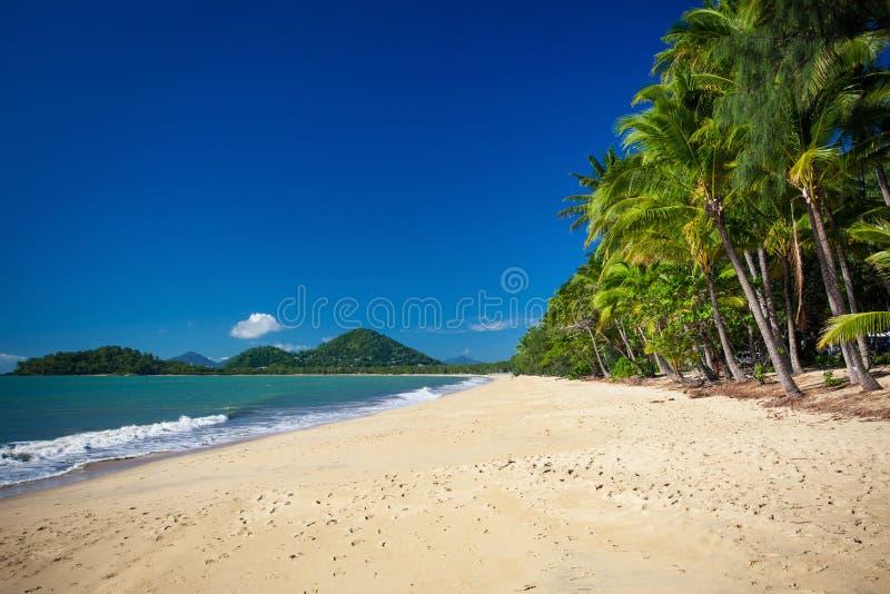 Palmträd på den tropiska stranden, gömma i handflatan lilla viken, Australien arkivfoton