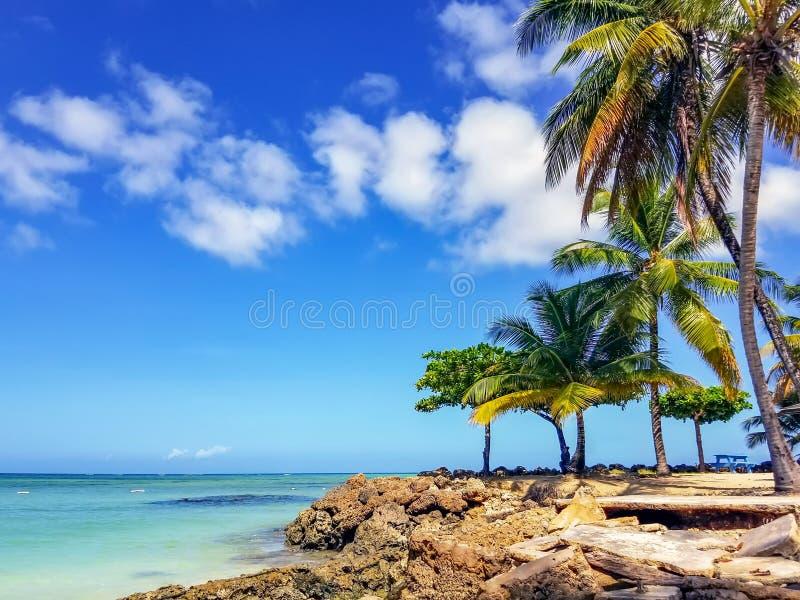 Palmträd på duvapunkt arkivfoton