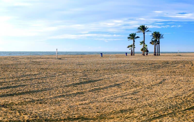 Palmträd på en ensam strand royaltyfri bild