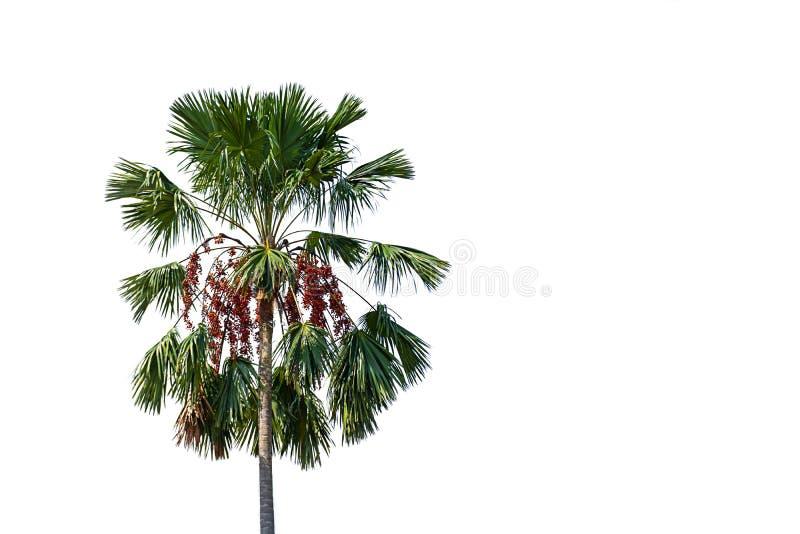 Palmträd på en vit bakgrund med urklippbanan stock illustrationer
