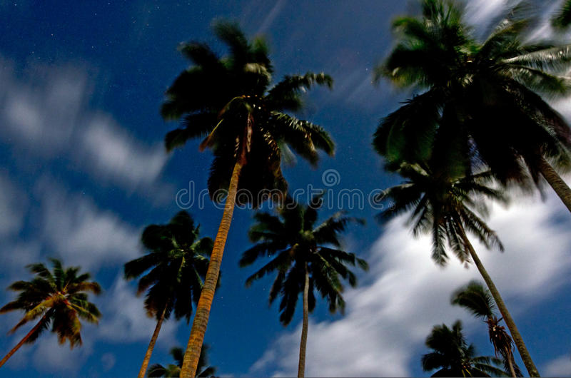 Palmträd på natten i den Aitutaki lagunkocken Island arkivfoton