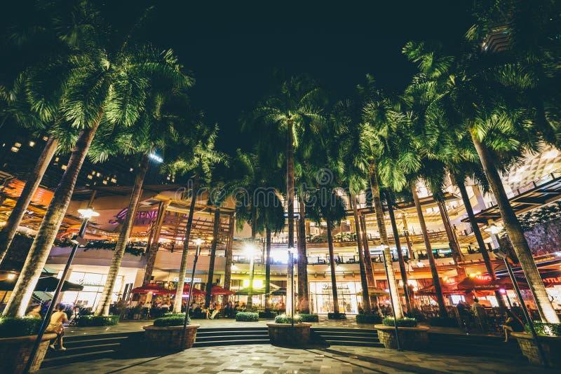 Palmträd på natten, på grönt bälte parkerar, i Makati, tunnelbanan Manila, arkivfoton