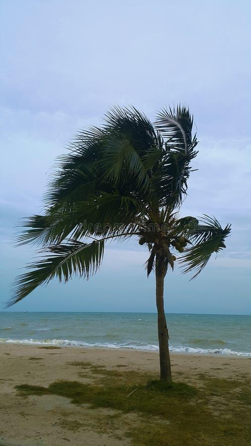 Palmträd på orkanen på den regna dagen arkivbilder