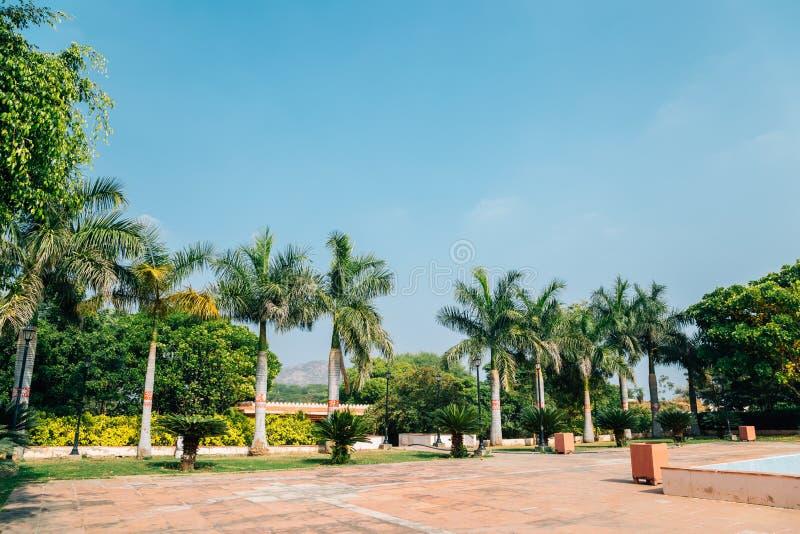 Palmträd på Rajiv Gandhi Park i Udaipur, Indien arkivfoton