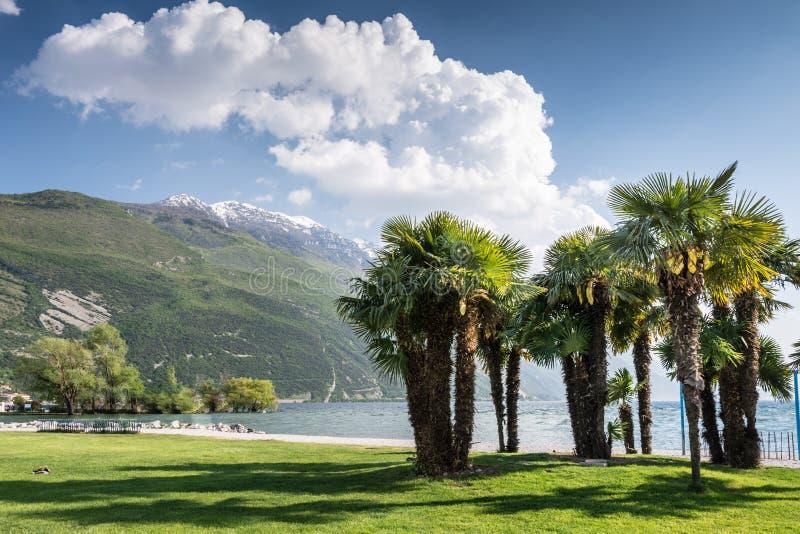 Palmträd på sjön Garda arkivfoto