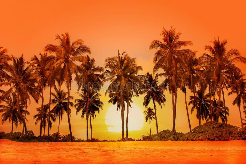 Palmträd på solnedgångbakgrund Sri Lanka royaltyfri foto