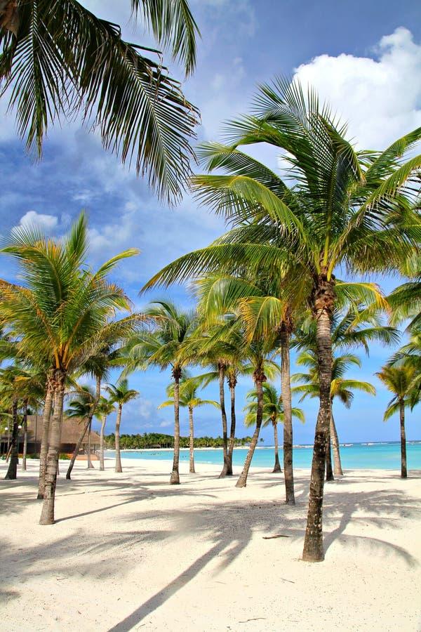 Palmträd på stranden royaltyfri fotografi