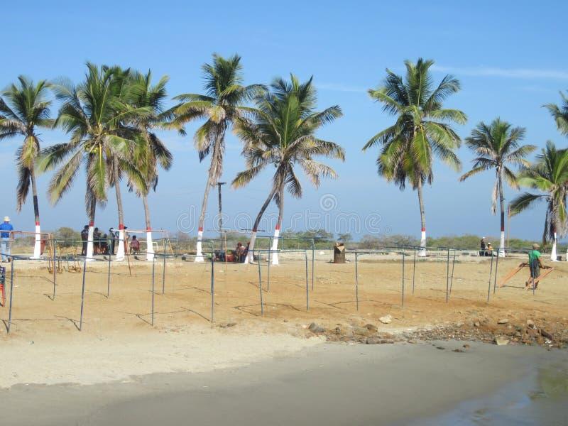 Palmträd på stranden fotografering för bildbyråer