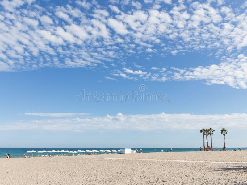 Palmträd på stranden av Alicante, Costa Blanca fotografering för bildbyråer