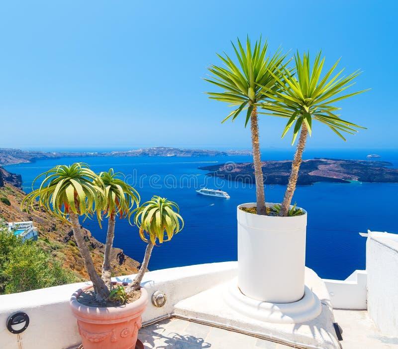 Palmträd på terrass med havssikt i den Firostefani byn, Santorini ö, Grekland arkivbilder