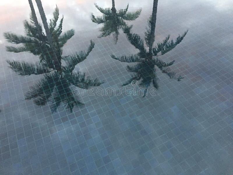 Palmträd reflekterade i simbassäng med blåtttegelplattan, Thailand fotografering för bildbyråer
