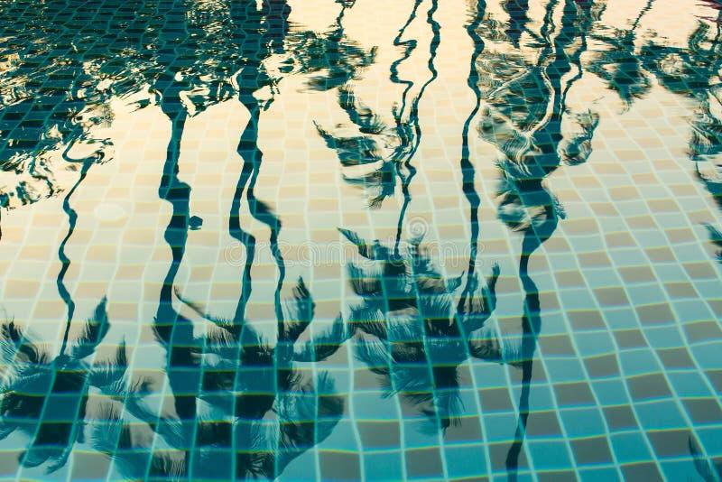 Palmträd reflekterade i vattnet av pölen Natur royaltyfri illustrationer