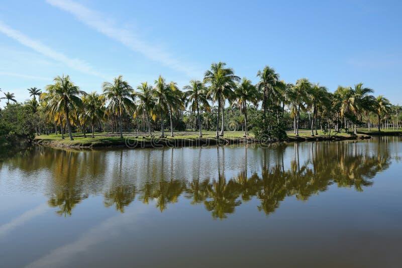 Palmträd reflekterar på Fairchild tropiska trädgårdar arkivbild
