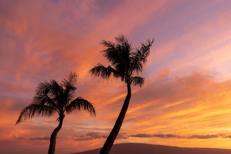 Palmträd Silhouetted i en tropisk solnedgång royaltyfri bild