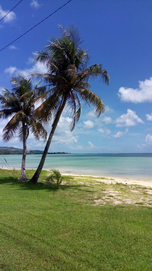 Palmträd sol, hav fotografering för bildbyråer