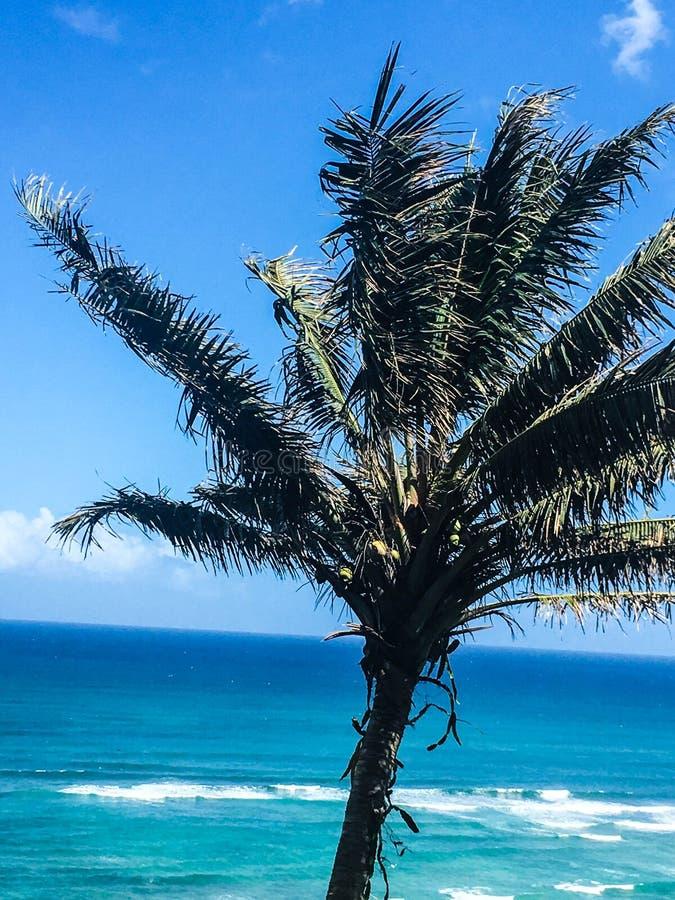 Palmträd som blåser i vinden på den tropiska ön fotografering för bildbyråer