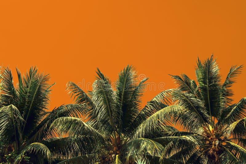 palmträd som isoleras på gul bakgrund royaltyfri bild