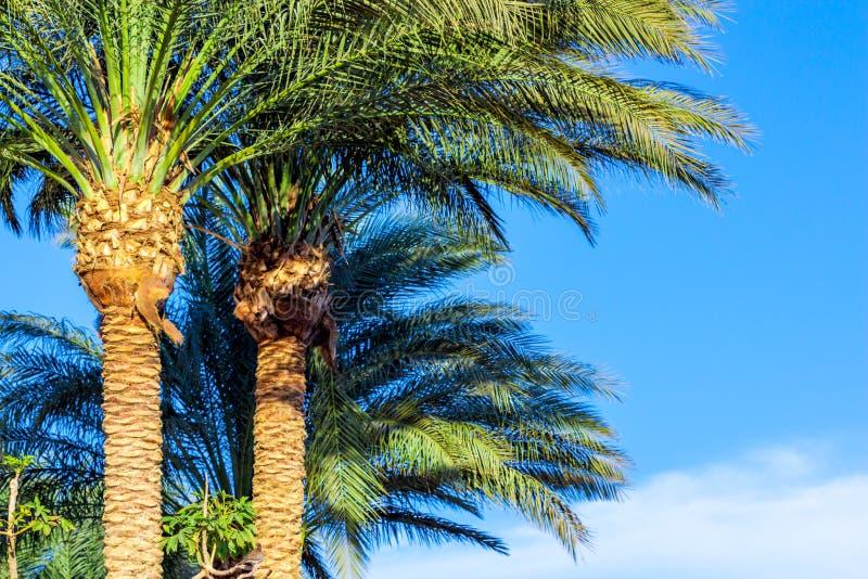 Palmträd stänger sig upp royaltyfri foto