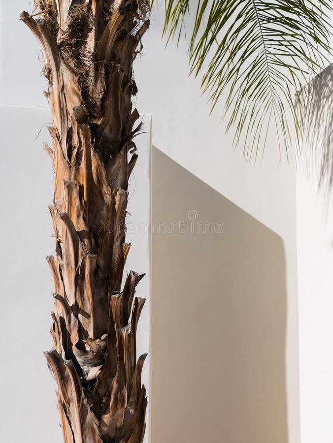 Palmträd sydvästlig arkitektur arkivbilder