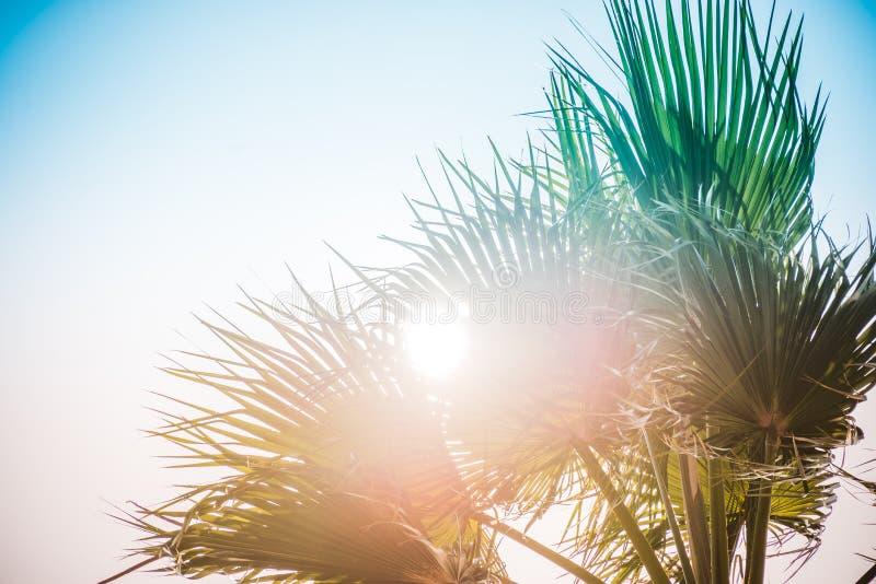 Palmträd under strålarna av sommarsolen arkivfoton