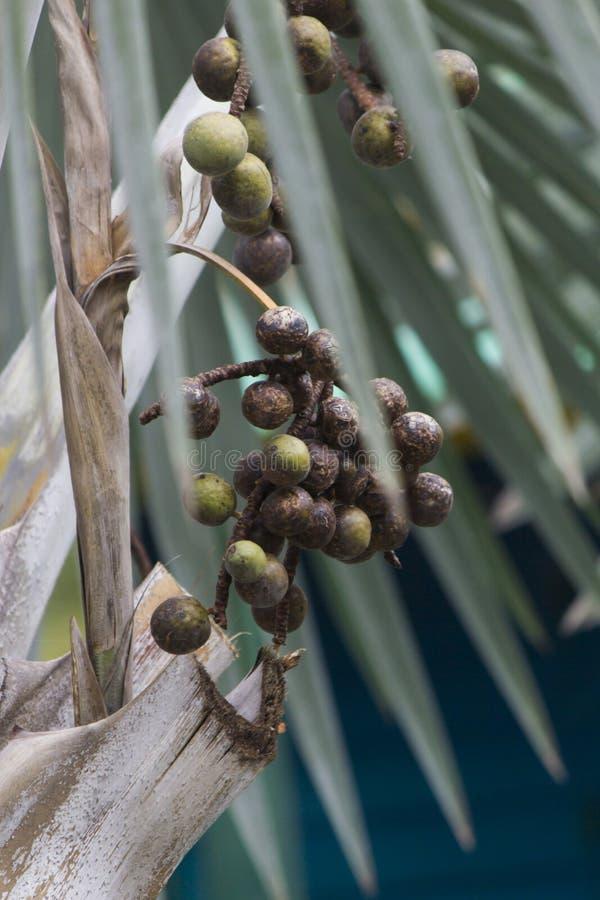 Palmträd växer överallt royaltyfri foto