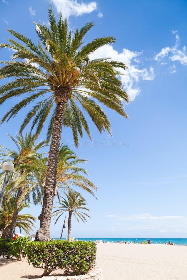 Palmträd växer på den sandiga stranden i Spanien arkivfoto