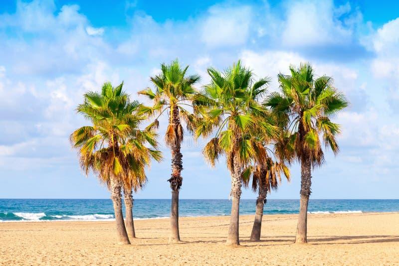 Palmträd växer på den tomma sandiga stranden arkivbild