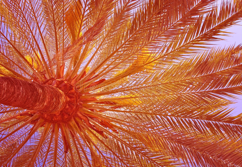 Palmträdbakgrund royaltyfri bild