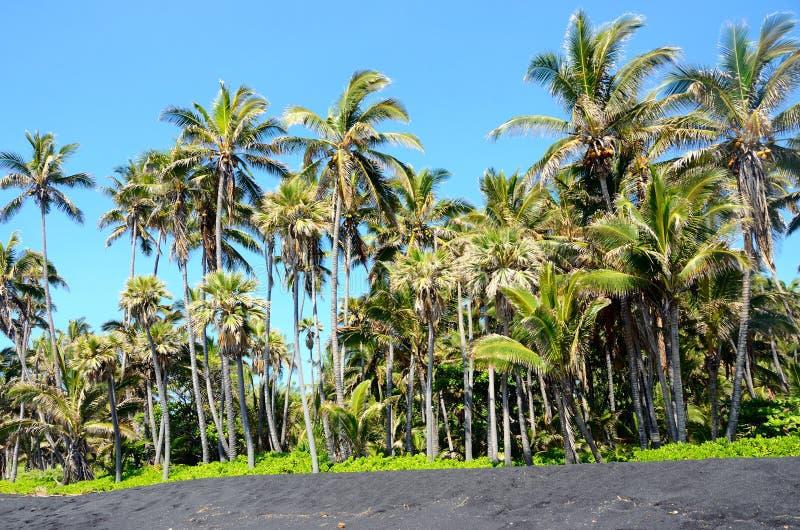 Palmträddunge på en svart sandstrand, stor ö, Hawaii royaltyfri bild