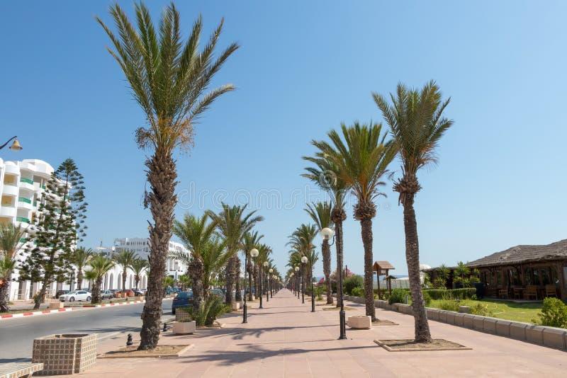 Palmträdet fodrade promenad med lyktstolpar Yasmine Hammamet, Tunisien royaltyfria foton