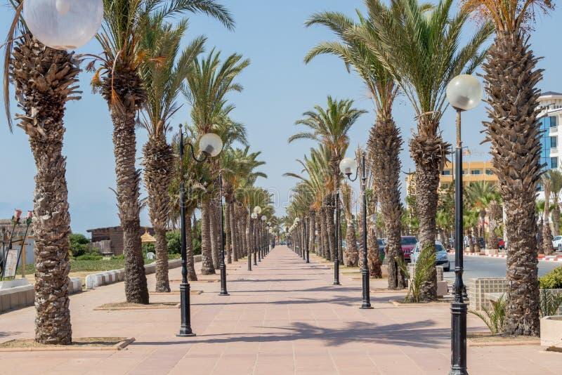 Palmträdet fodrade promenad Yasmine Hammamet, Tunisien, Afrika arkivbilder