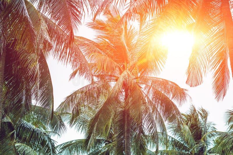 Palmträdet krönar med gröna sidor på solig himmelbakgrund coco fotografering för bildbyråer