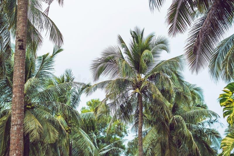 Palmträdet krönar med gröna sidor på solig himmelbakgrund Cocopalmträdblast - sikt från jordningen Palmblad på royaltyfri fotografi