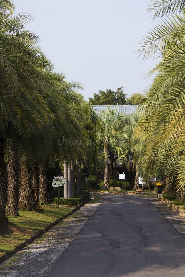 Palmträdgränd royaltyfria foton
