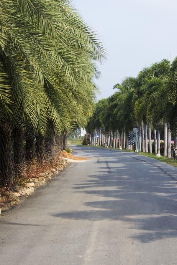 Palmträdgränd fotografering för bildbyråer