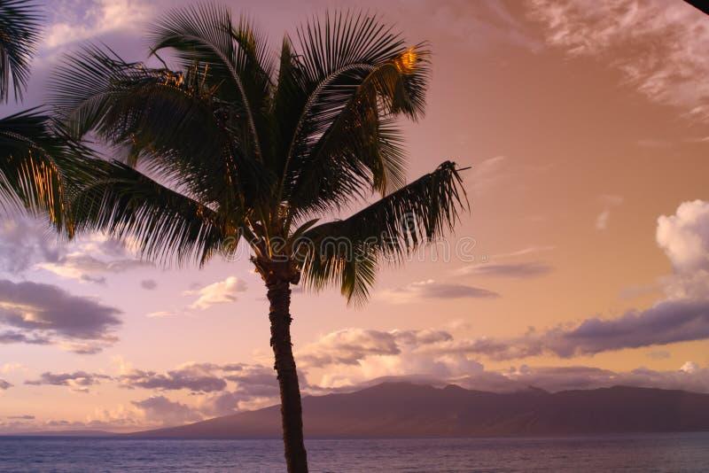 Palmträdkontur mot blått- och gulingsolnedgånghimmel - hawaii arkivbilder