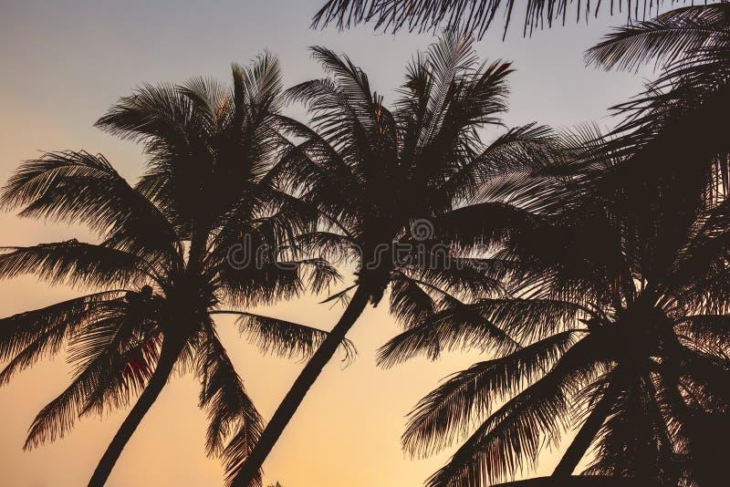 Palmträdkontur på solnedgången i den Hainan ön - Kina arkivbild